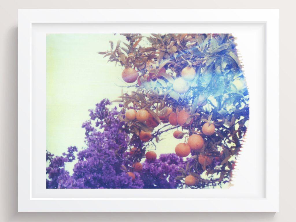 matt schwartz she hit pause purple oranges
