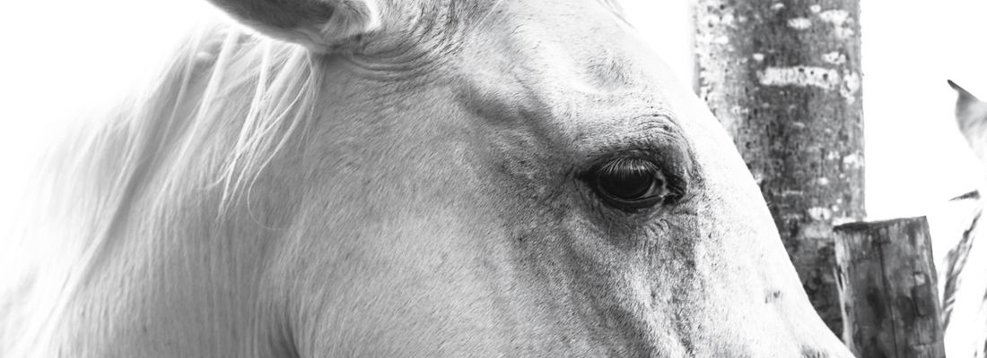 Of Real Life Unicorns: Claudia Tarlow